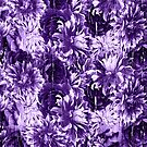 Lavendel Leidenschaft von creativevibe