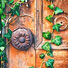 Ivy leaves on decayed wooden door by Silvia Ganora