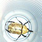 Beetle by Debbi Tannock