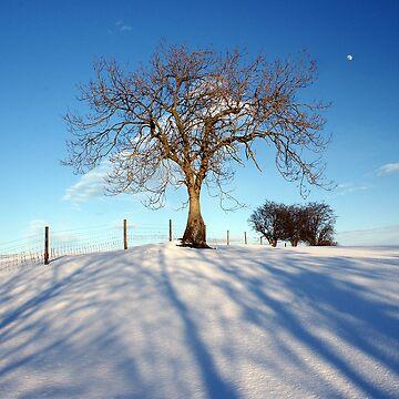 Winter by Meach
