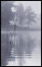 Morning Mist by Dave  Higgins