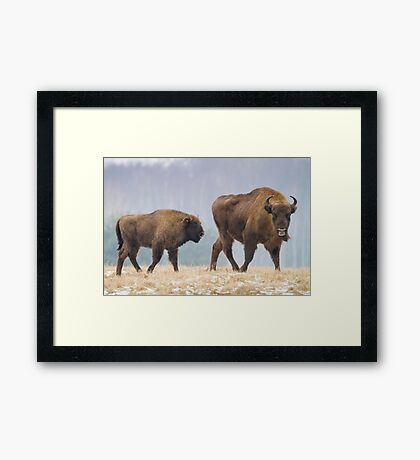 Cow and a calf Framed Print