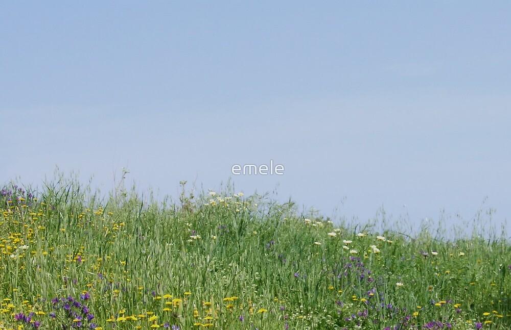 Summer Meadow by emele