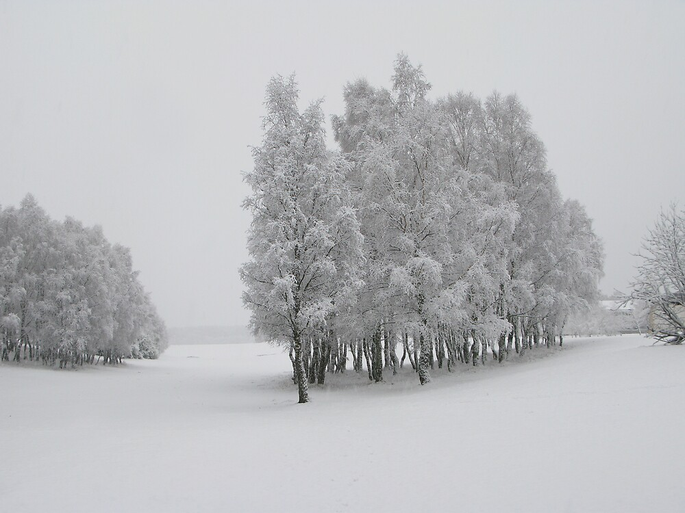 Winter Trees by Mike Paget