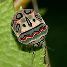 Bug (Harlequin?) by Russell Mawson