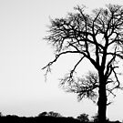 Tree Silhouette #6 by David Hawkins-Weeks