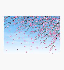 Cherry Blossoms Blue Sky Photographic Print
