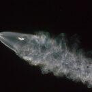SpaceX Iridium Flight 4 by Mike Herdering