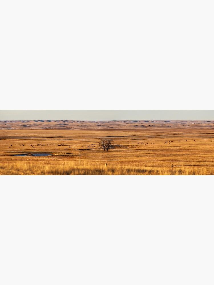 The badlands-South Dakota by richwest