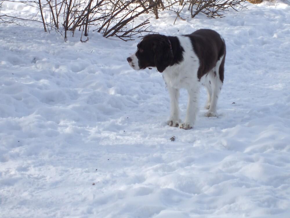 dog in snow 2 by sianteri