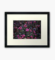 Pink Power Framed Print