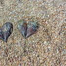 Seashells (in love) by the seashore by alan shapiro