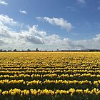 Yellow Tulips by SavingMemories