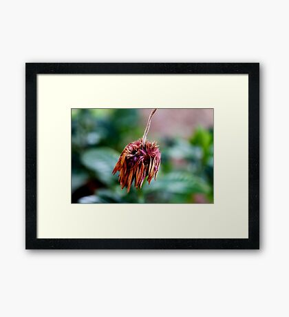At The End Of All Things Framed Print