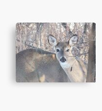 Deer Double Take At George Wyth Park Canvas Print