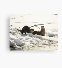 Otter Pair On Ice At George Wyth Canvas Print