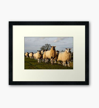 C'mon ladies, Pose for the camera Framed Print