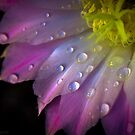 Cactus Flower by Edward Shepherd
