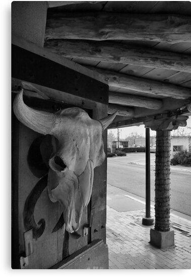 Rattlesnake Museum, Old Town, Albuquerque by Mitchell Tillison