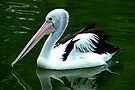 Serene Pelican by Renee Hubbard Fine Art Photography
