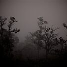 early morning fog in ohia forest by Lawrence Taguma