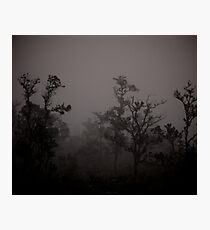 early morning fog in ohia forest Photographic Print