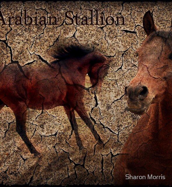 Arabian Stallion by Sharon Morris