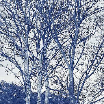 Trees in Winter - Cyanotype Effect by Artberry