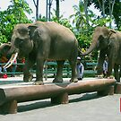 Three Asian Elephants by Keith Richardson