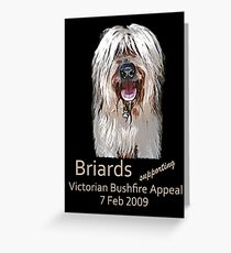Briards Bushfire Appeal Greeting Card