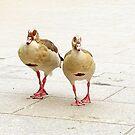 Egyptian ducks near Thames by ruxique