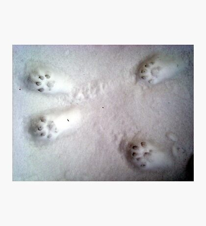 Paw Prints in the Snow Photographic Print