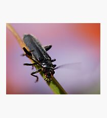 unknown insect Photographic Print