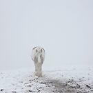 15 feet of pure white snow by DeirdreMarie
