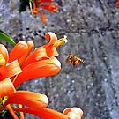 Bee by Digby