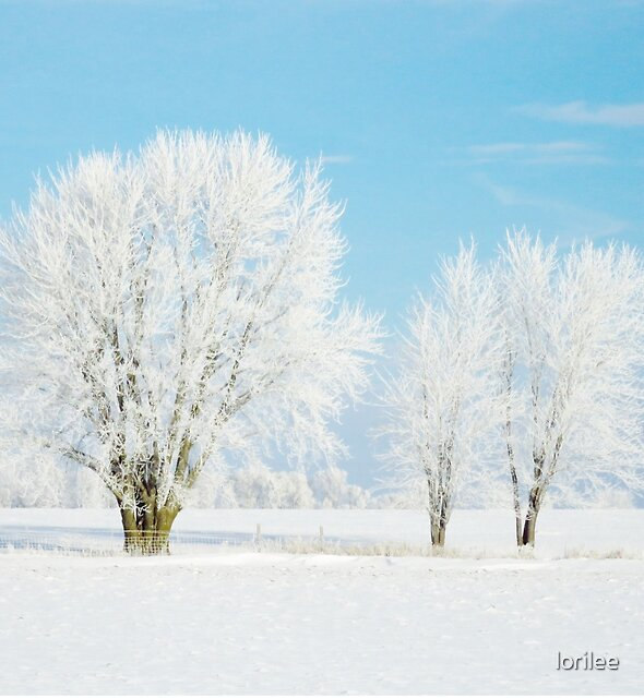 Frosted Winter Trio by lorilee