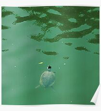 Turtle reading signs in green water Poster