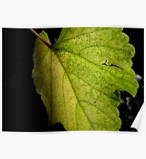 Turn Toward the Light - green leaves Poster