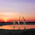 SUNSET WITH GIRAFFES 2 by Michael Sheridan
