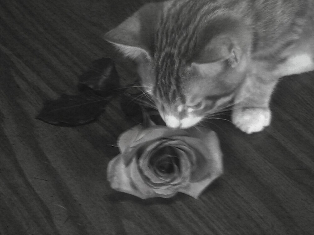Vincent and The Rose by grannyjune