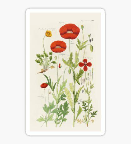 Botanical illustration: Poppy by David Dietrich – State Library Victoria Sticker