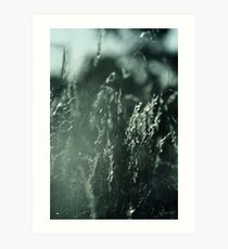The Wind Cries Mary Art Print