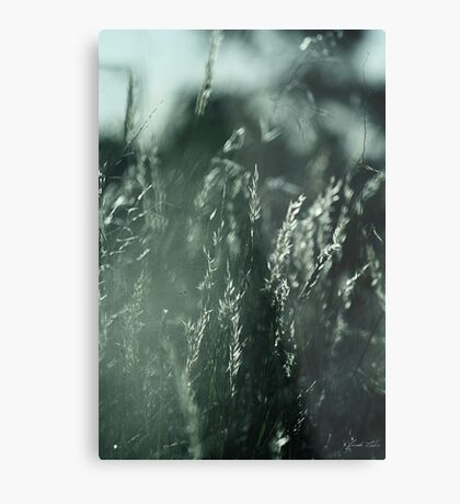 The Wind Cries Mary Metal Print