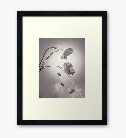 Falling Petals Framed Print
