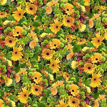 Spring Sunflower by KolJoseph
