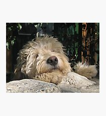 Shaggy Dog Photographic Print