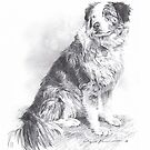 herding dog drawing by Mike Theuer