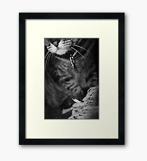 Wiskers & Threads Framed Print