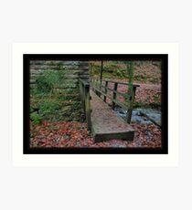 Plymbridge Woods...... Art Print