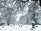 Snow in the Churchyard by Colin  Williams Photography